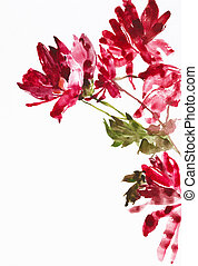flowers as background - watercolor painting of flowers, use...