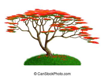 royal poinciana - illustration, royal poinciana tree...