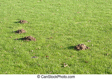 Mole mounds in the sport stadium in autumn background