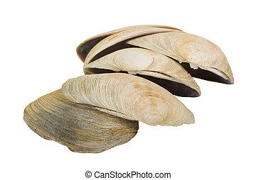 Aquatic Mollusk Shells