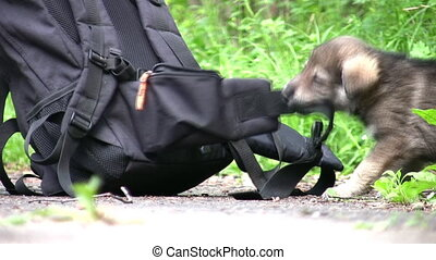 puppy and knapsack