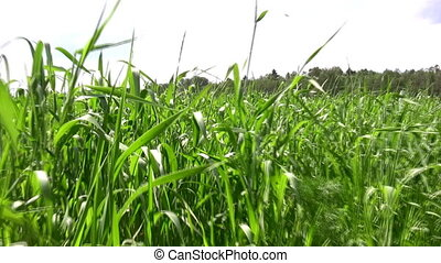 walking in grass field