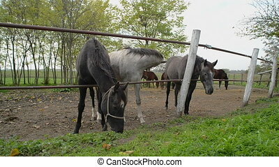 Grazing Horses behind the ranch fence on a cloudy afternoon....
