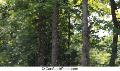 Swarm of midges in forest. - A swarm of bugs fills the air....