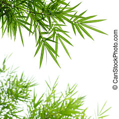 bamboo leaves isolated on white background with copy space