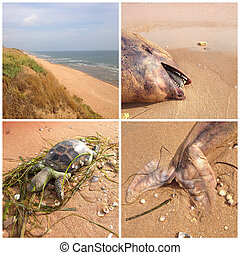 Sea of Azov views - Collage Sea of Azov views Beach, dead...