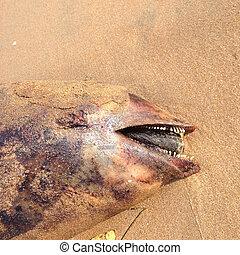 Dead dolphin, Harbour porpoise, on beach, sea of Azov