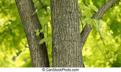 Summer tree. - Tree trunk in the summer. Tree gently sways...