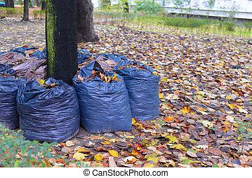 leaves rake in the row