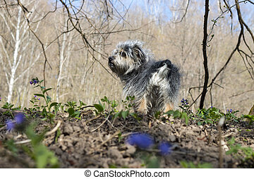 Doggy in the spring forest - Small doggie in the forest in...