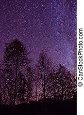 Star sky - Night sky with lot of shiny stars, many trees are...
