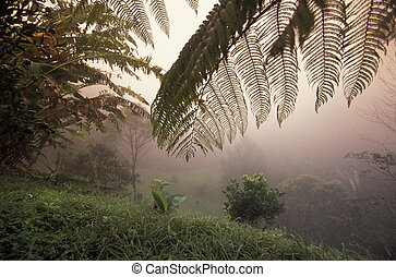 LATIN AMERICA HONDURAS COPAN - a tropical Forest up the...