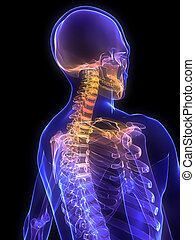painful neck - 3d rendered x-ray illustration of a human...