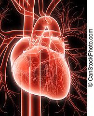 human, Coração