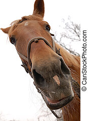 Horse muzzle - Almost isolated muzzle of brown horse