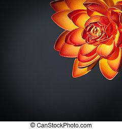 Beautiful orange lotus flower border isolated on black...