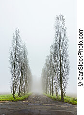 foggy landscape with tree alley - foggy rural landscape with...