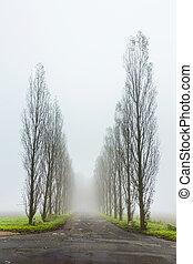 dimmig, landskap, med, träd, gränd,