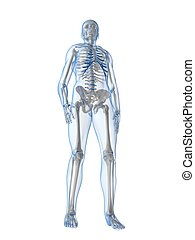 human skeleton - 3d rendered illustration of a human...