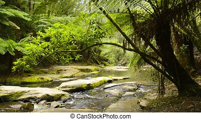 Otway National Park - Erskine River running through the...