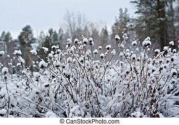 Winter scene .Frozenned flower .pine forest