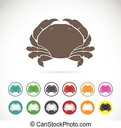 Vector image of an crab on white background