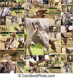 photo collage donkeys