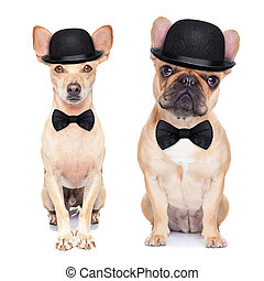 funny retro dog - comedian classic couple of dogs ,wearing a...