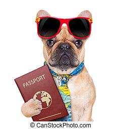 dog passport - fawn bulldog with passport immigrating or...