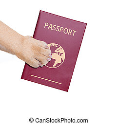dog passport - dog or pet holding its passport with paw ,...