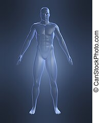 male body shape - 3d rendered illustration of amale body...