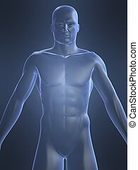 male body shape