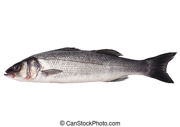 Fresh seabass isolated on a white backround