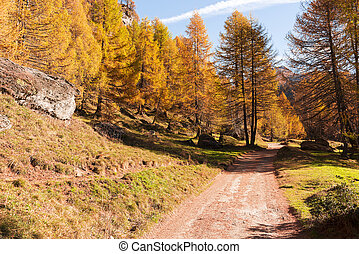 Mountain forest in autumn season - Mountain path and forest...