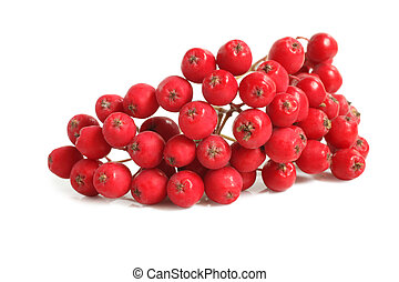 Branch of ashberry on white background