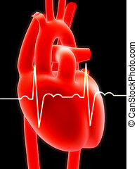 human heart - 3d renderee anatomy illustration of a heart...