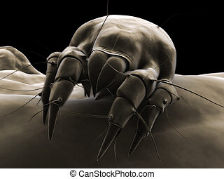dust mite - 3d rendered closeup of a mite