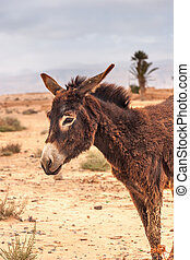 Brown donkey at field at summer Morocco