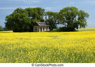 Little House on the Prairies - An old prairie house...