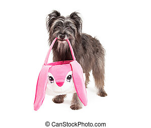Pyrenean Shepherd Dog Carrying An Easter Basket - A Pyrenean...