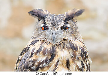 Horned owl or bubo bird close-up portrait of silent night...