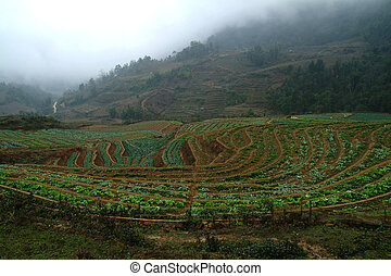 View of vegetable farm in Northern of Vietnam 1