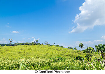 Green hill and blue sky