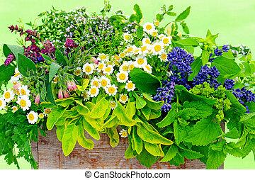 fresh herbs - Various fresh herbs in a wooden box