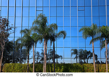 Palm trees with Glass building