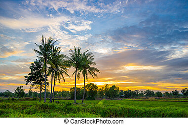 Sunset in the countryside - Lanscape sunset in the...