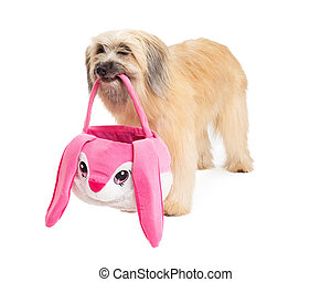 Pyrenean Shepherd Dog Holding Easter Basket and Standing