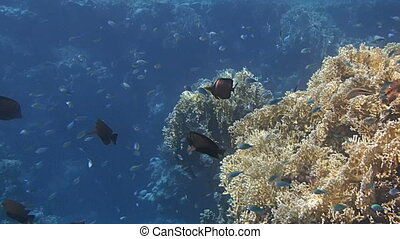 colorful red sea - red sea snorkeling