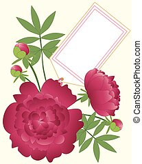 paeony greeting card - an illustration of a floral greeting...