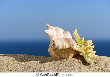 Conchas marinas, y, Estrellas de mar, en, Un, playa, sand.,...